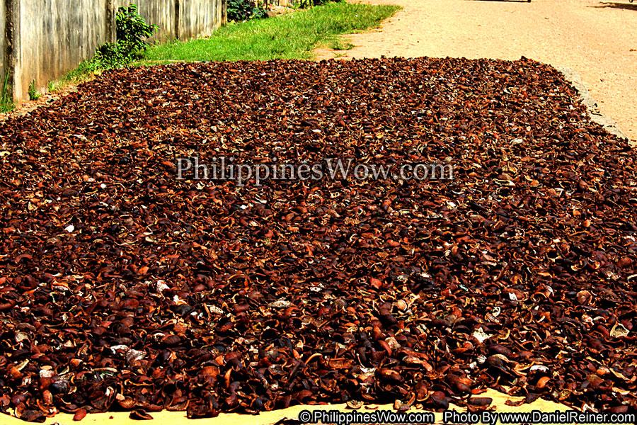 Philippine Copra